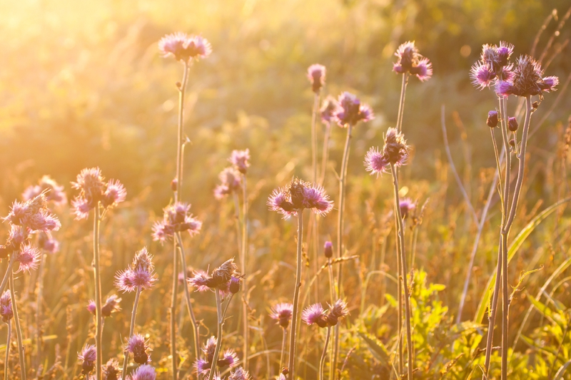 Morning field background with wild flowers